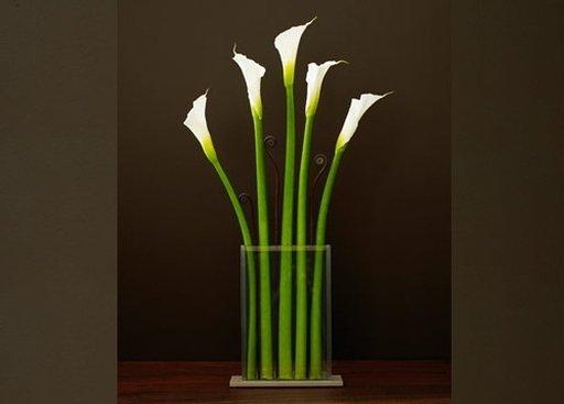 V3- Calla Lilies with Fiddle Head Ferns