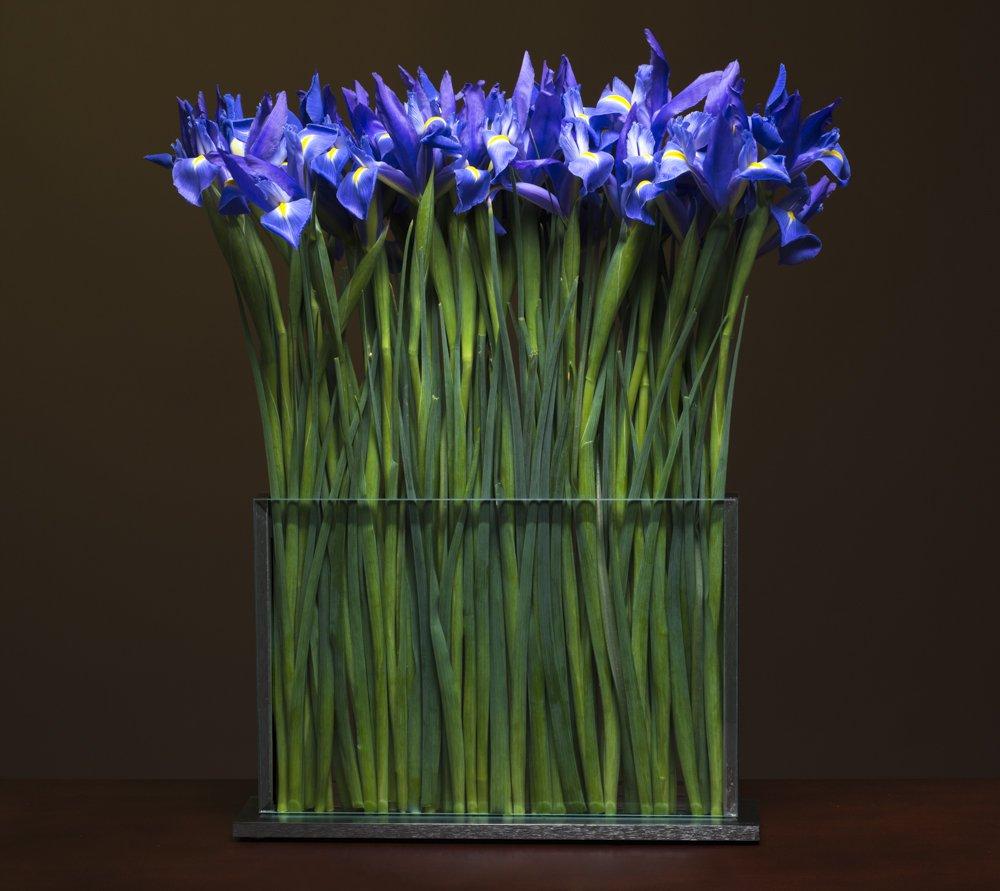 webresH4-Irises.jpg