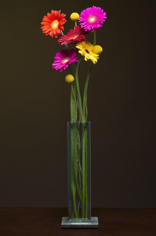 V1- Gerbera daisies and crespidia