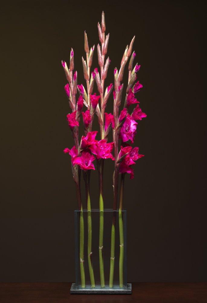V2- Pink Gladiolas