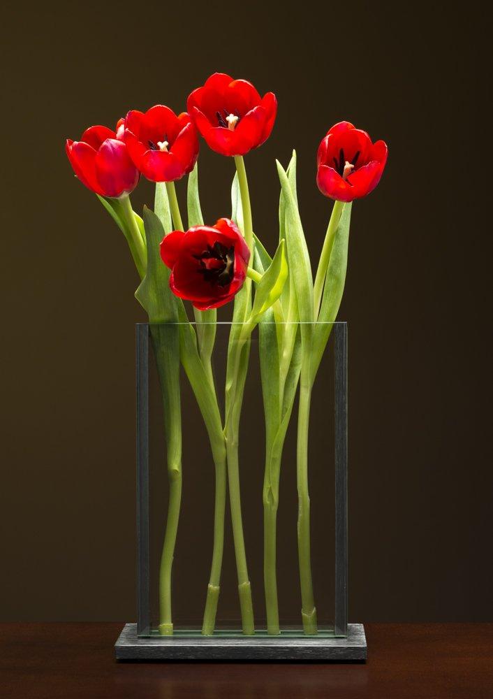 V2- Red Tulips