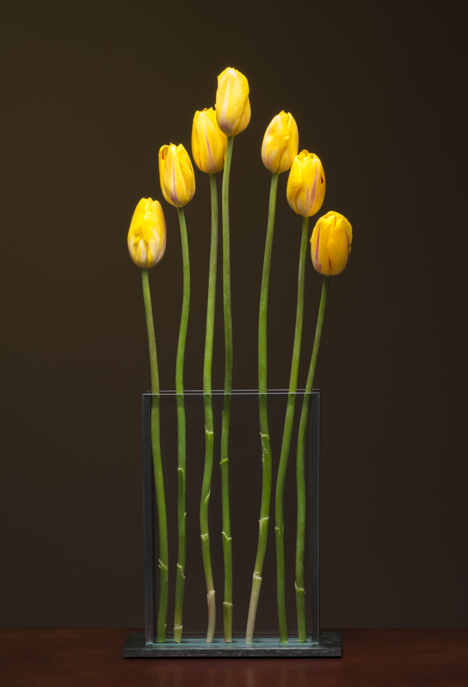 V3 with Yellow Tulips
